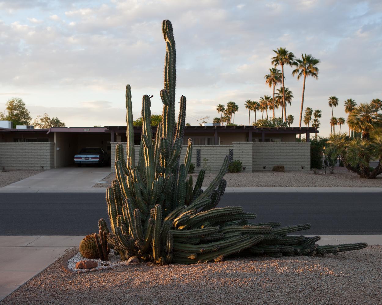 Cactus abîmé par le vent, Sun City
