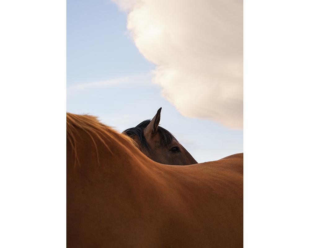 Les chevaux ferment aussi les yeux © Marion Gambin