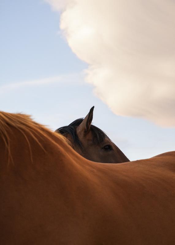 Exposition Révérences - Les chevaux ferment aussi les yeux ©Marion Gambin